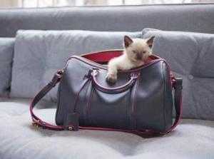 Edition Limitée - SC Bag